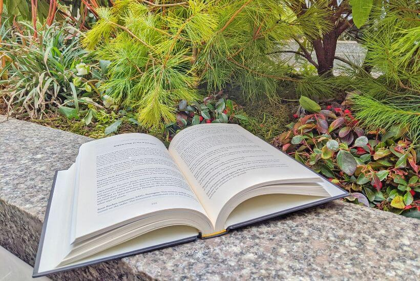 open book and green ferns