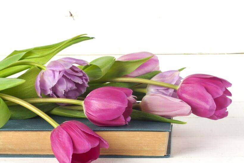 purple tulips on book - best books of Spring 2021